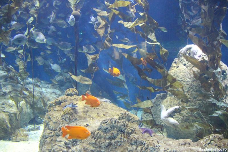 Oceanografic Valencia 00009