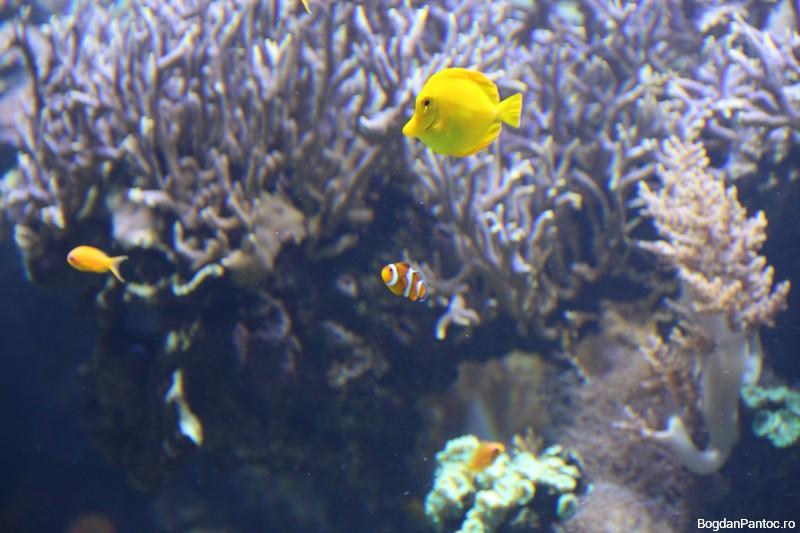 Oceanografic Valencia 00015