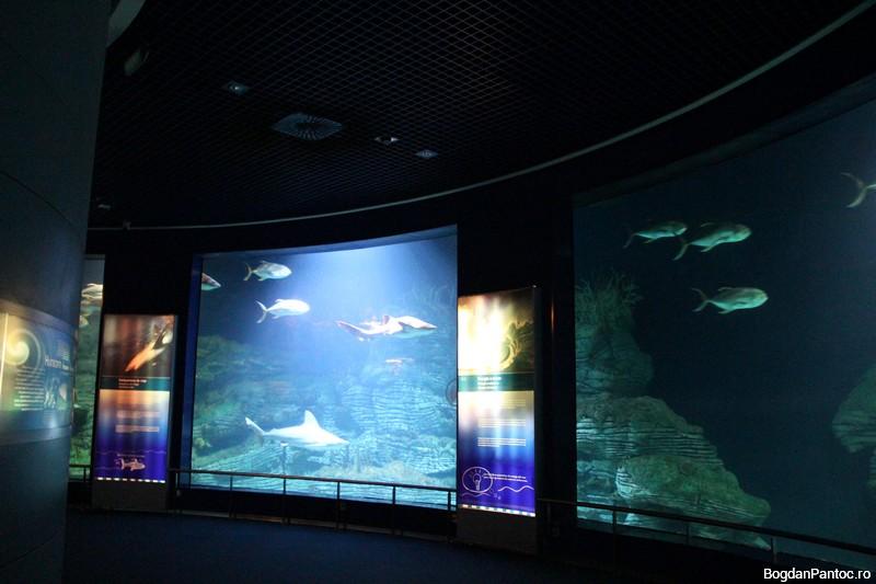 Oceanografic Valencia 00025