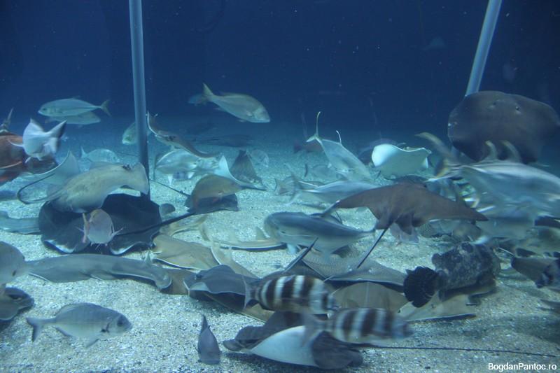 Oceanografic Valencia 00027