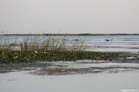 Delta Dunarii - Sf. Gheorghe 26