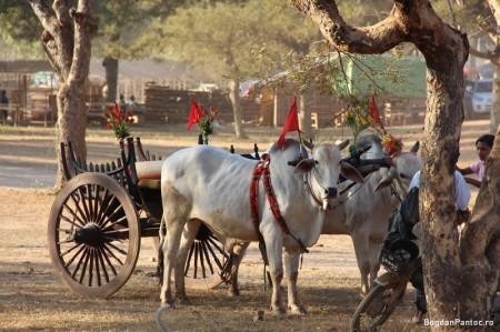 Bagan - Myanmar 20
