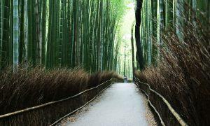 Japonia fara plan – Kyoto, nenumarate temple si o padure de bambusi