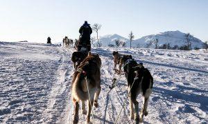 Cum a fost condusul unei sanii trase de caini husky – Tromso, Norvegia